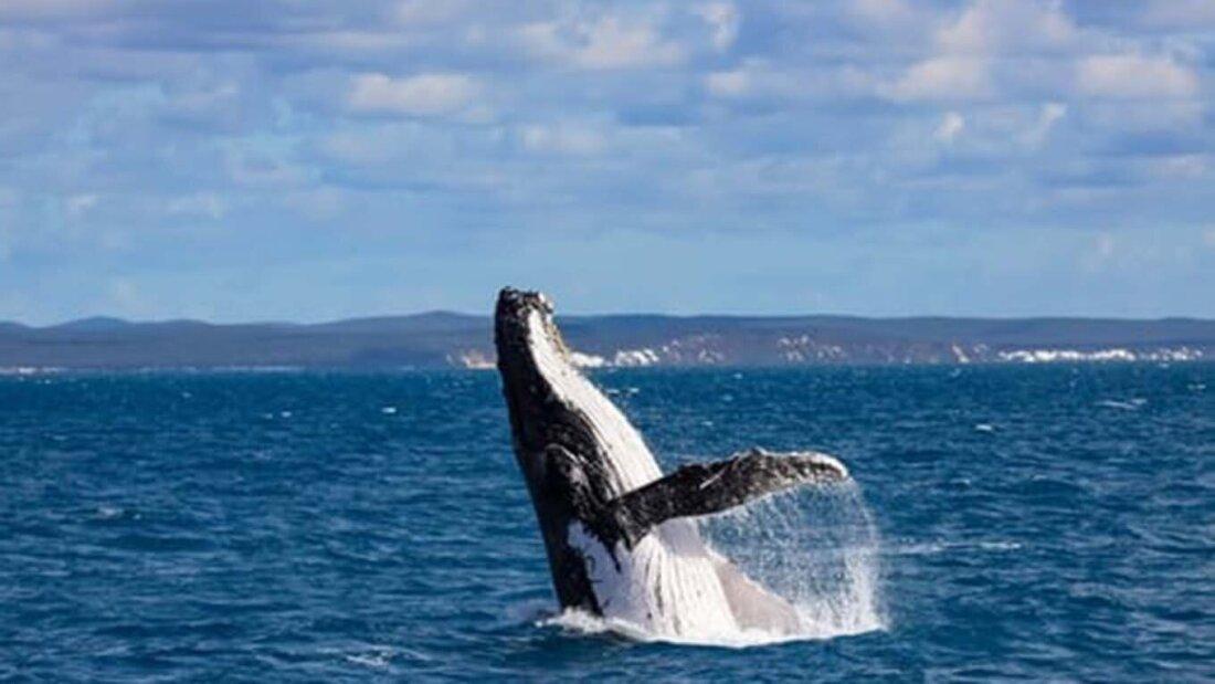 Whale diving in ocean